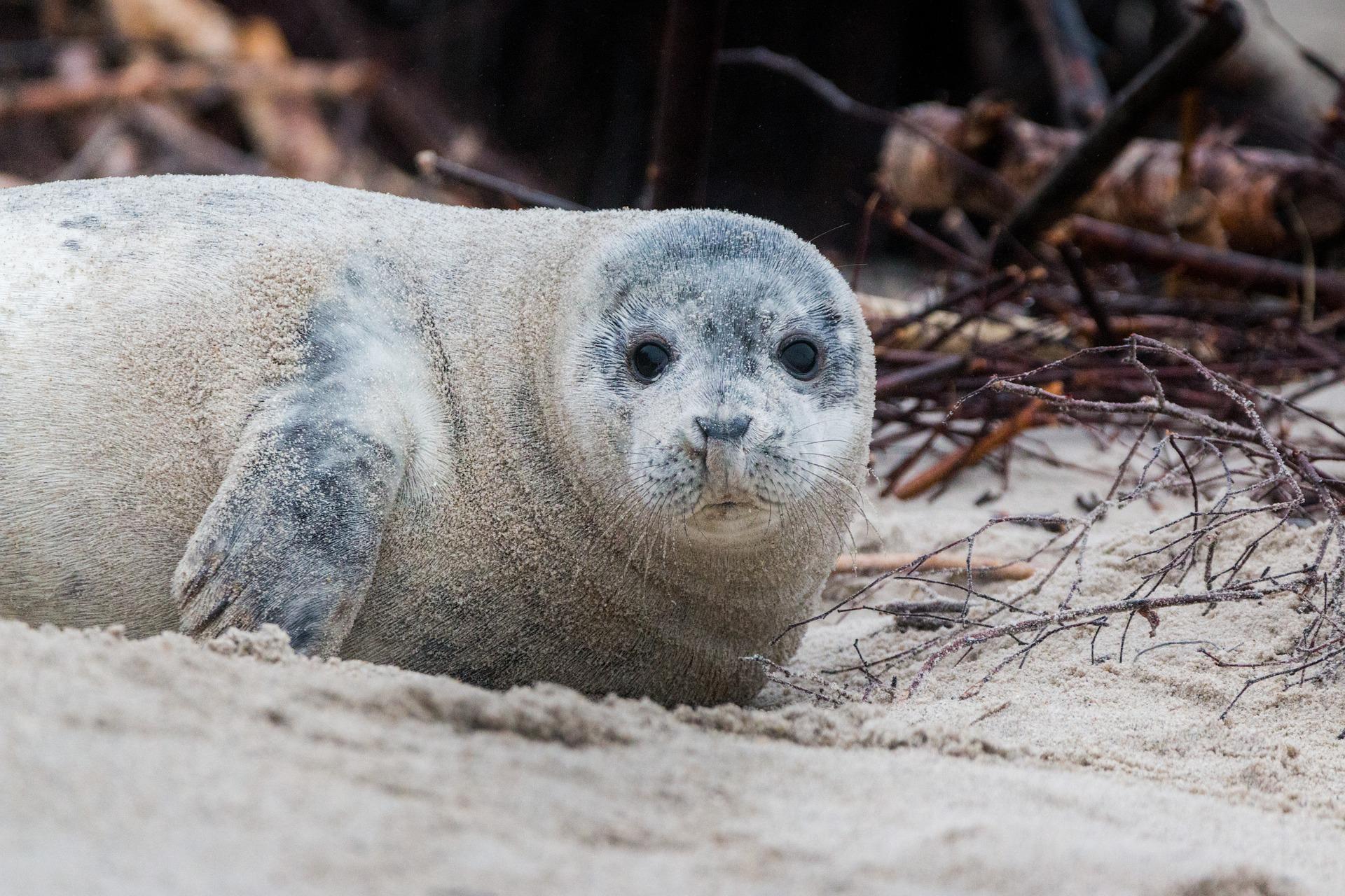 The WaterXperience – ein Ferienprogramm zur Erkundung der Klima- und Wasserwelten auf Helgoland